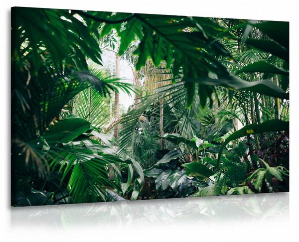 Malvis Obraz domácí džungle  - zvìtšit obrázek