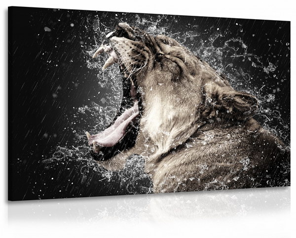 Malvis Obraz lvice s vodou  - zvìtšit obrázek