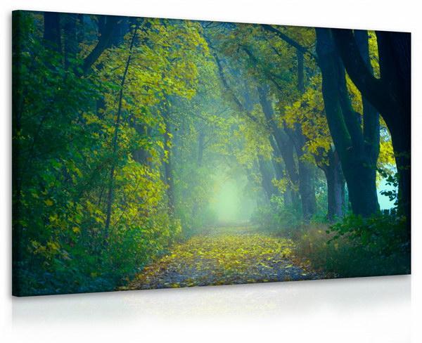 Malvis Obraz lesík - cesta  - zvìtšit obrázek