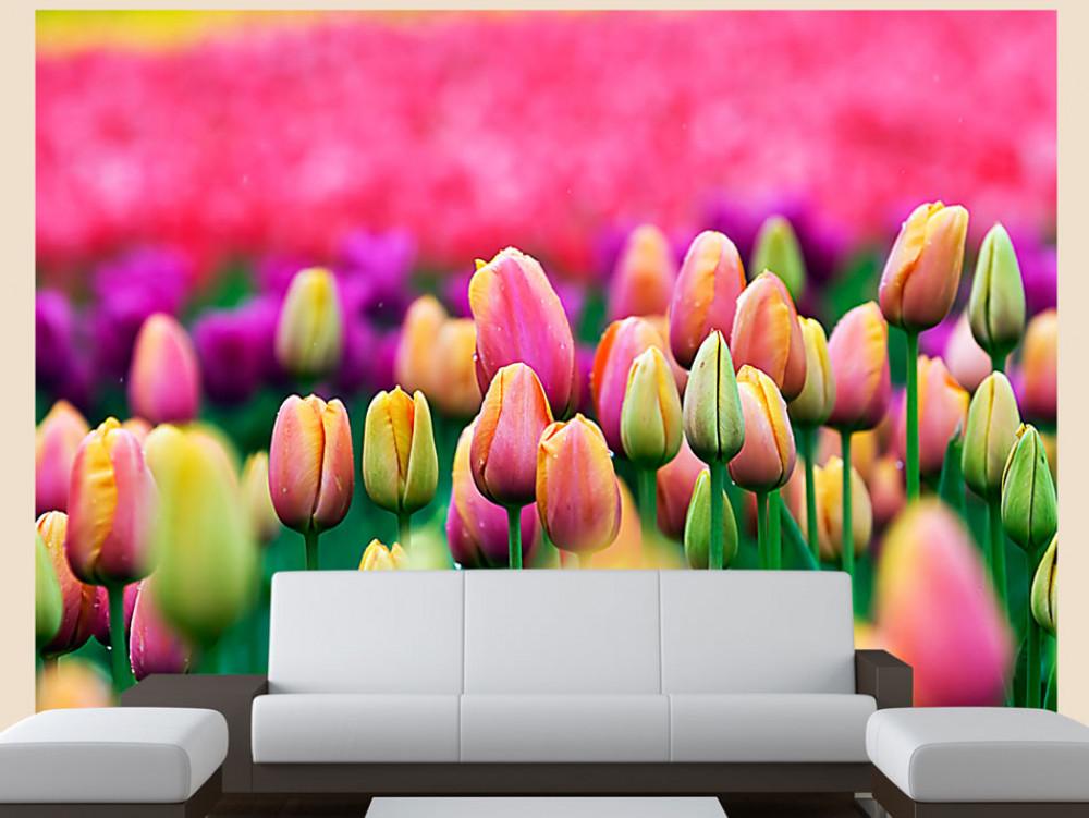 Murando DeLuxe Fototapeta barevné tulipány  - zvìtšit obrázek