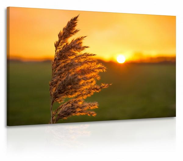 Malvis Luèní tráva jednodílný obraz  - zvìtšit obrázek